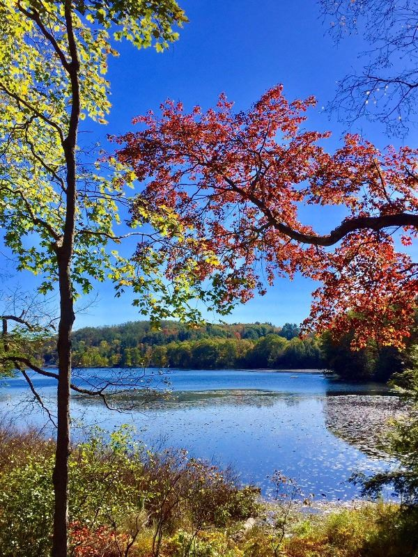 Ashfield Lake in fall