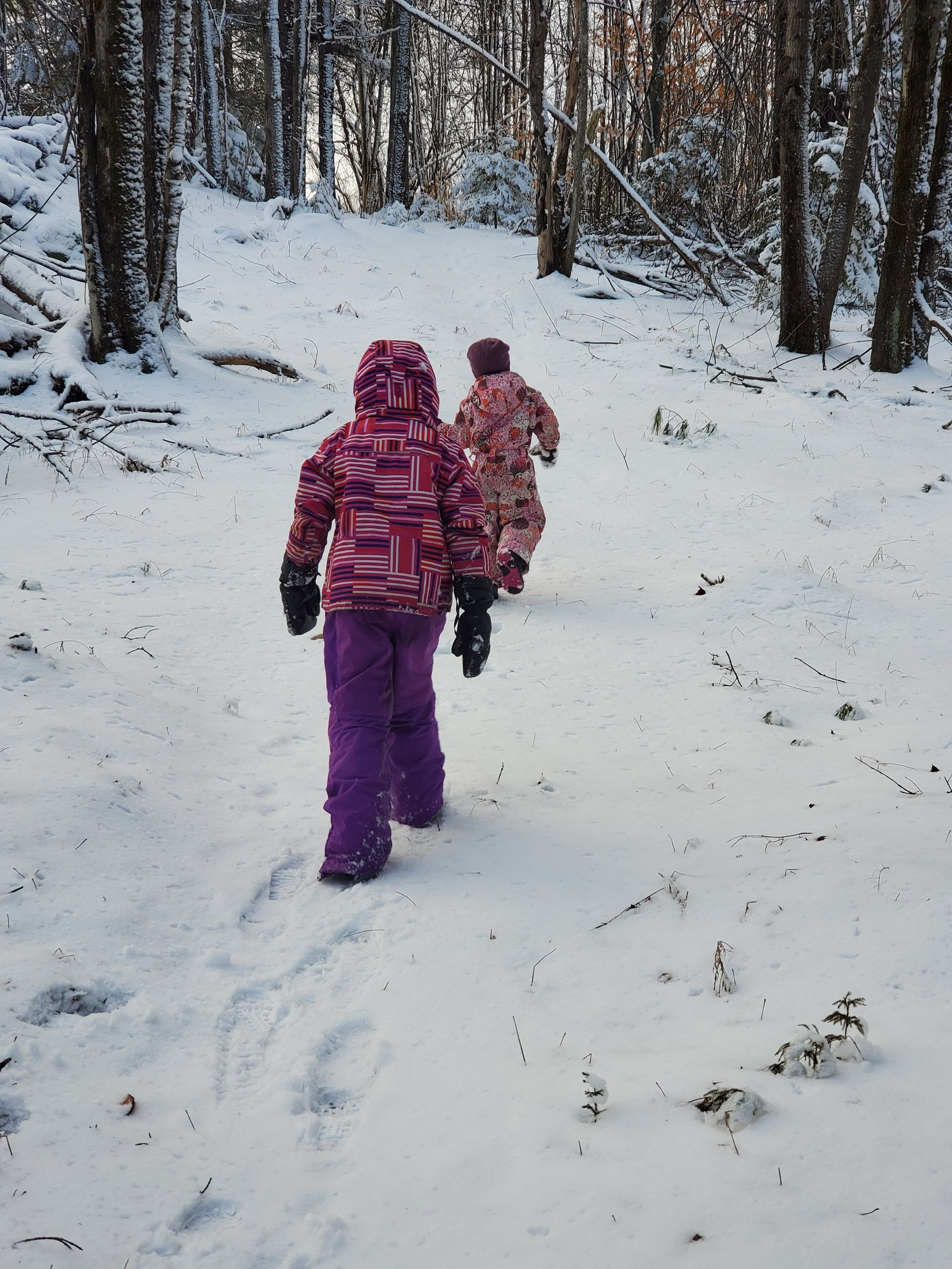 Layla Mae and Charlotte Derry walking on the Ashfield Trails.   Searching for ice to crunch under their feet or slide on is always a big draw of our walks. (photo by Katie Derry)